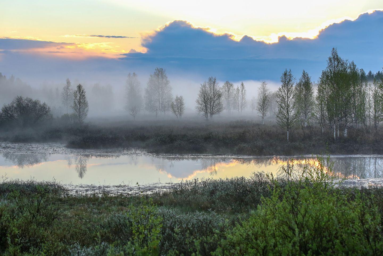Beautiful foggy summer landscape in Ranua, Lapland