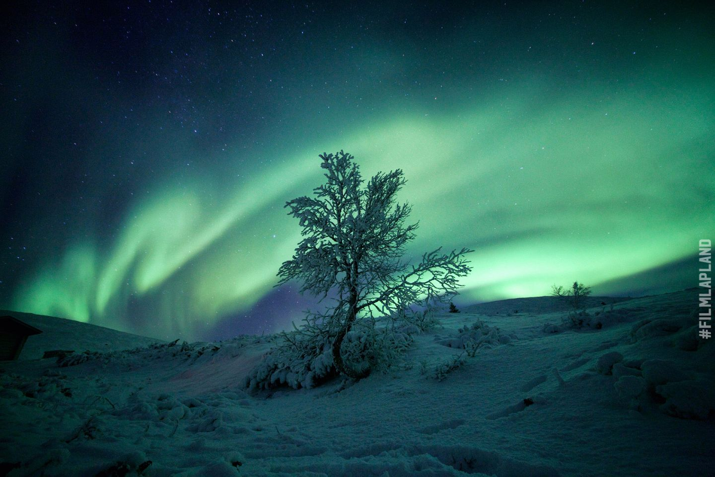 Northern Lights over a tree in Pallas, Finland