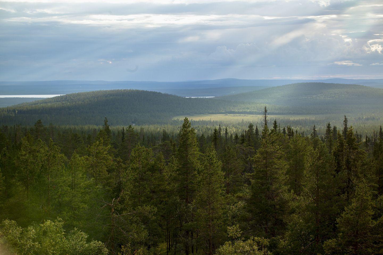 Sun rays touching the endless wilderness in Sodankylä, Lapland