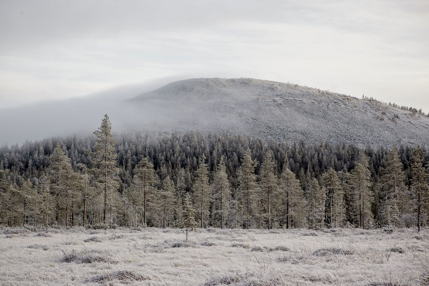 Mist over a frosted arctic forest in Kolari, Lapland