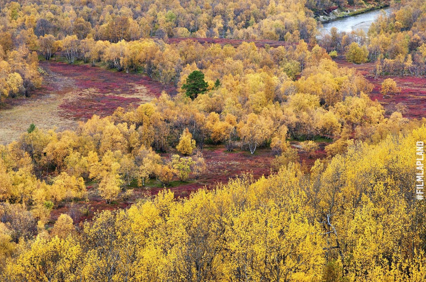 forests of Utsjoki, Finland in autumn