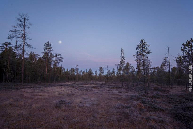Moon over bog in Rovaniemi, Finland