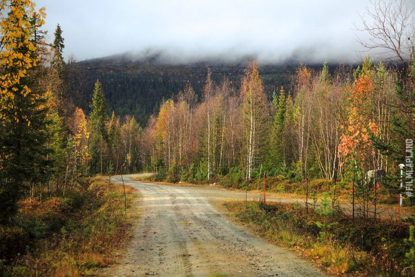 forest road in Enontekiö, Finland in autumn