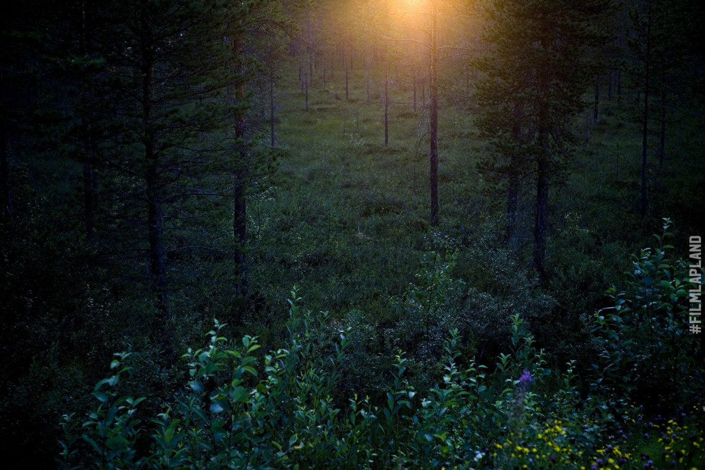 Midnight Sun over Rovaniemi forest in Finland