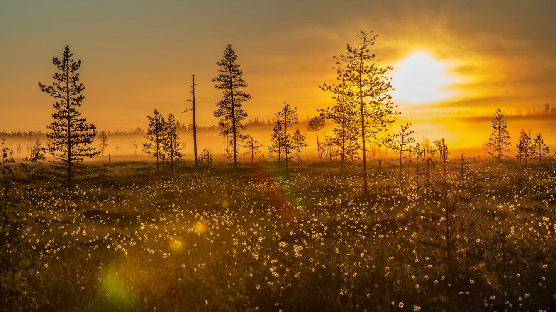 Sunset at Ranua bog