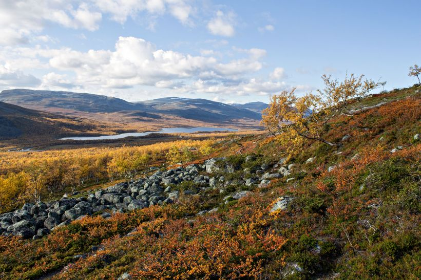 Autumn colors in Enontekiö, Lapland