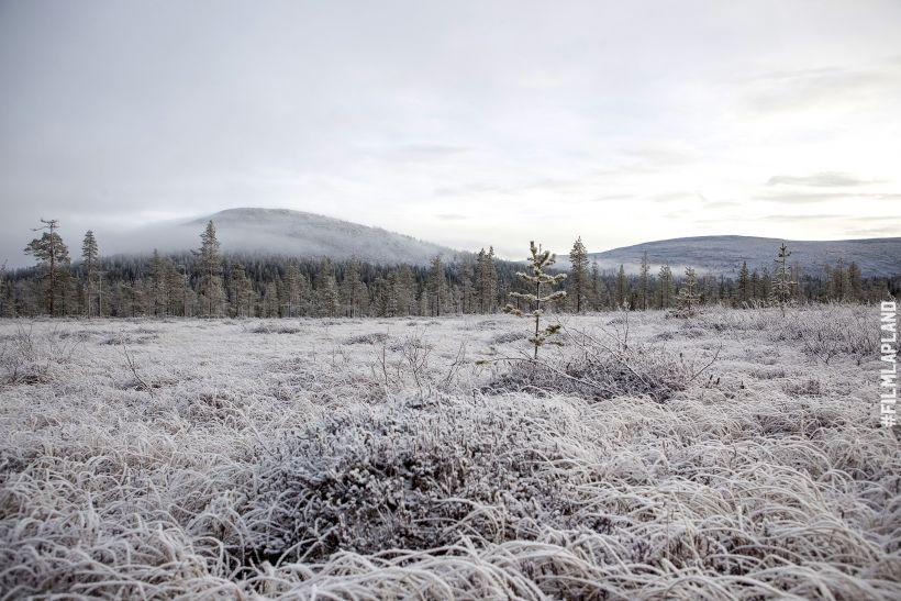 Frosty field in Ylläs, Kolari, Finland