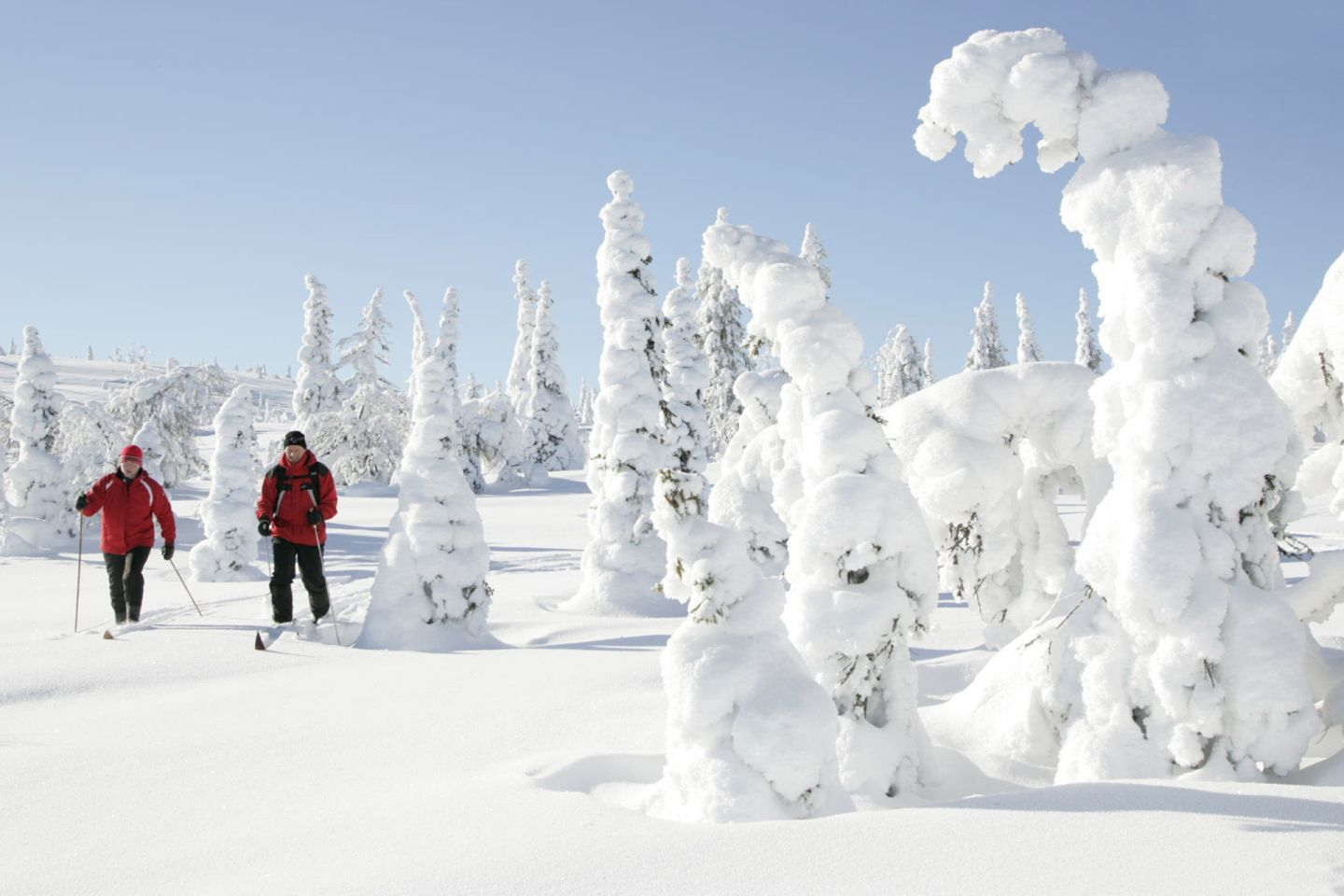 People skiing in snowy forest in Posio, Finland