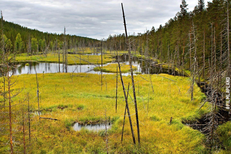 Wet bog in Kemijärvi, Finland