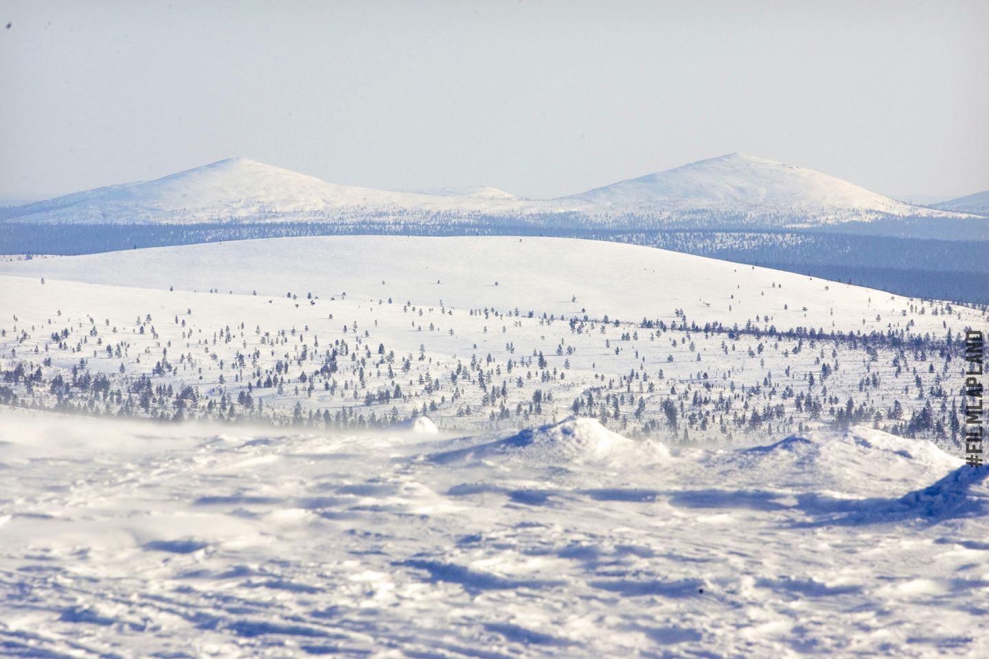 Arctic forest under a thick coat of snow in Inari, Finland