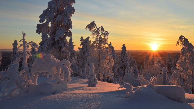 Snow capped trees during winter and polar night in sunset at Savukoski in Finnish Lapland.