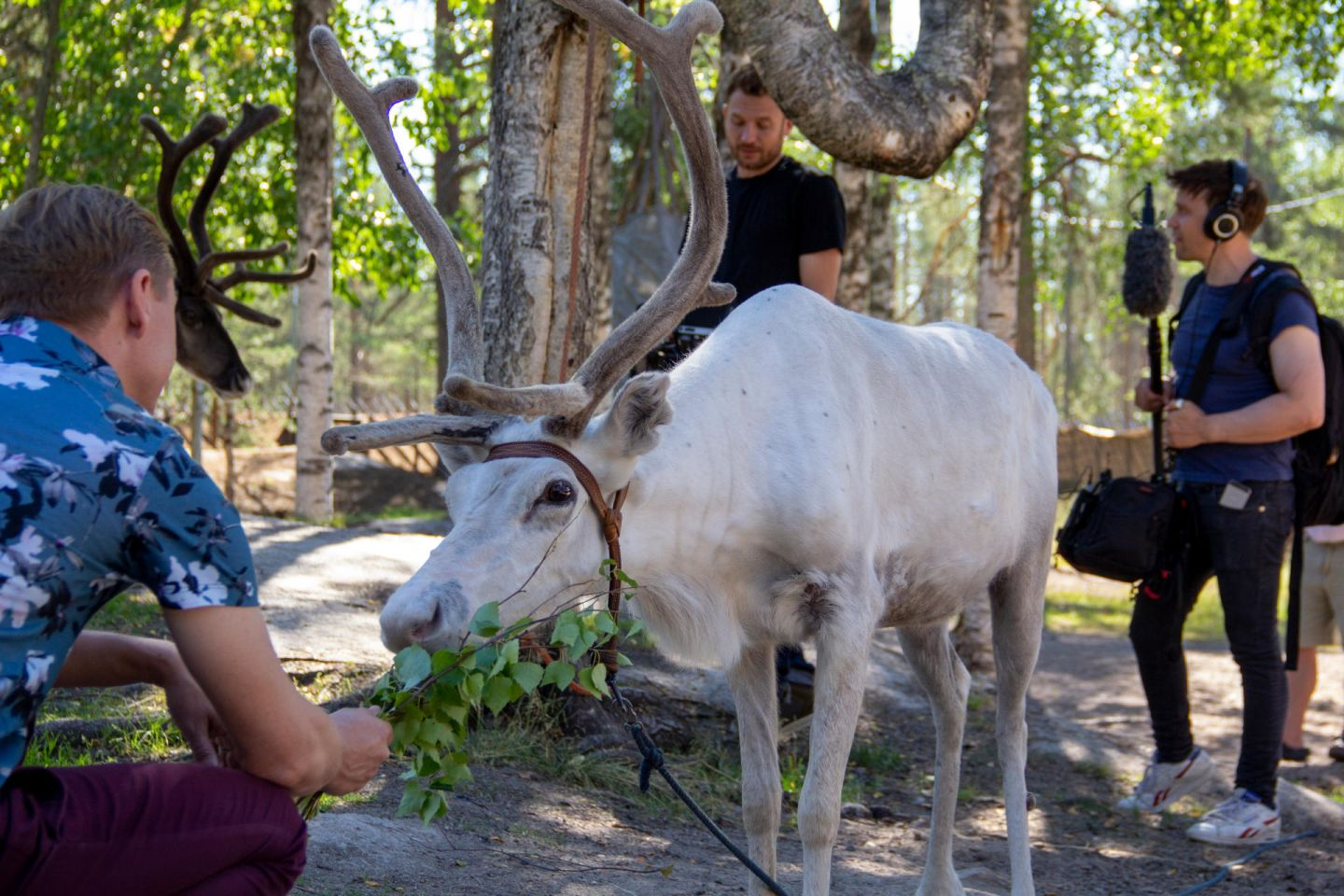 Host feeding reindeer during filming of reality show at Santa Claus Village in Rovaniemi, Finland