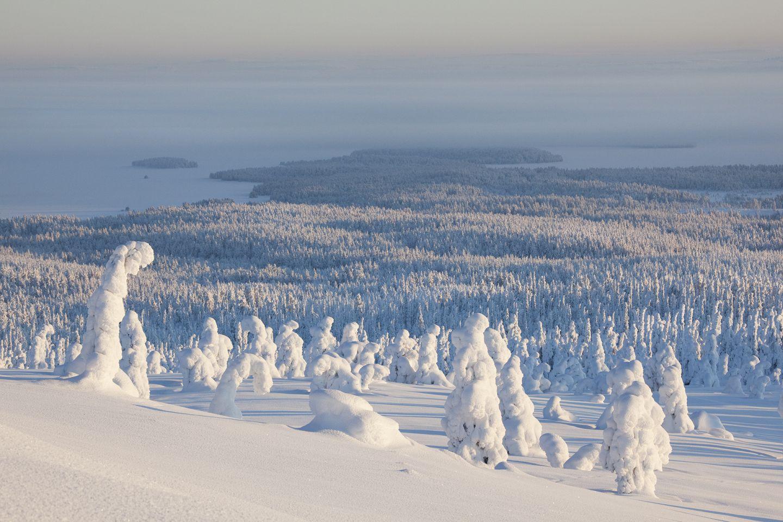 Finland National Park | Riisitunturi, Lapland