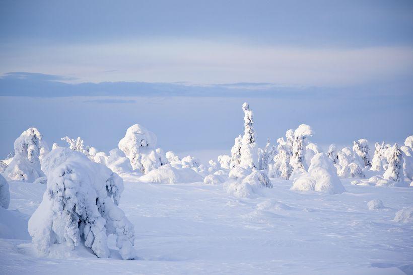 Heavy snow cover on trees in Luosto, Sodankylä, Finland
