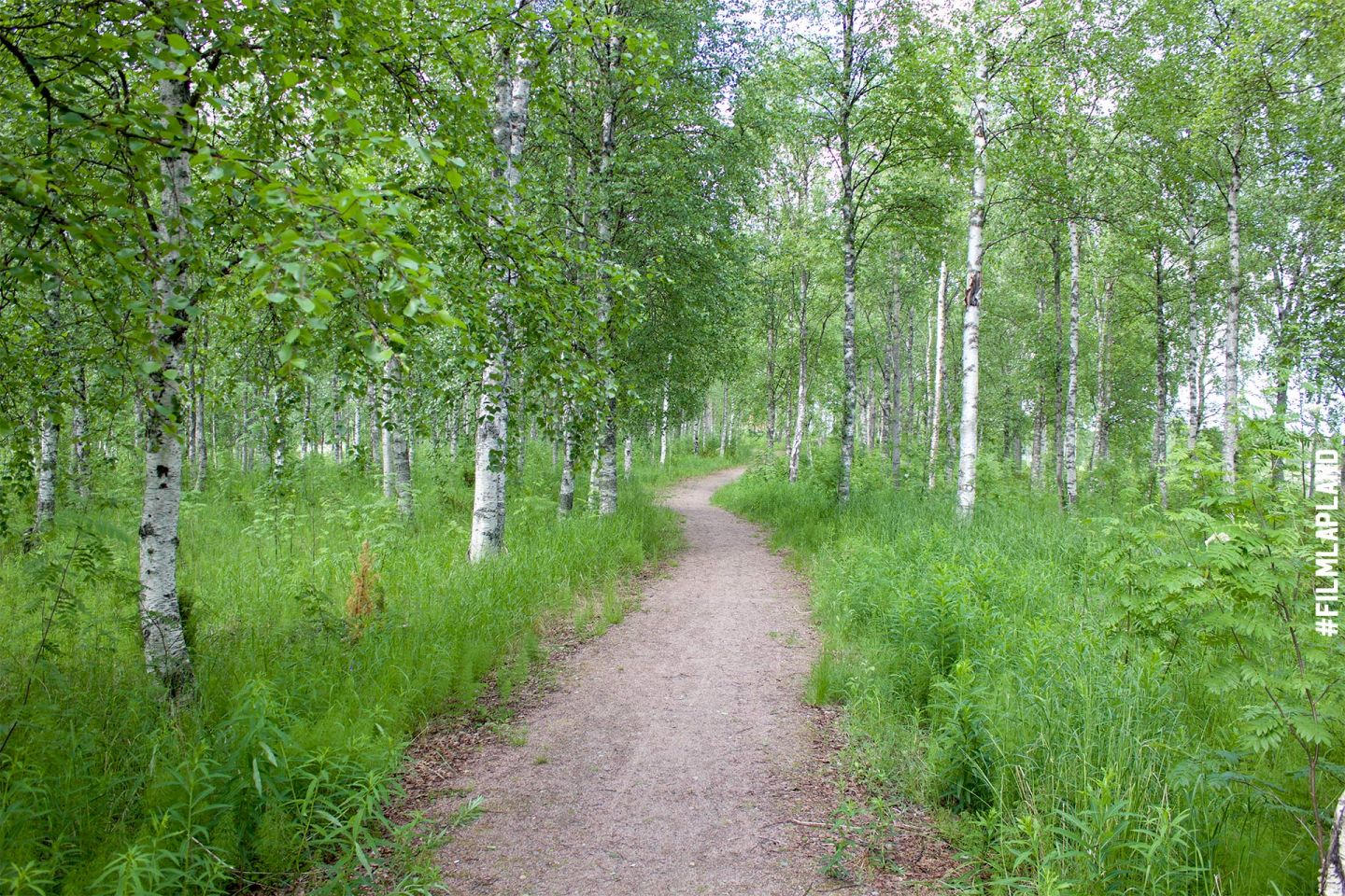 A trail in a green birch forest, Kemijärvi Lapland