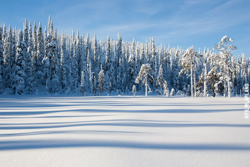 Snowy spruce forest by the frozen lake in Lapland