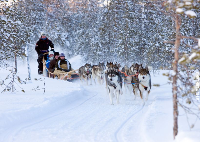 Dogs pulling sleigh in Rovaniemi, Finland
