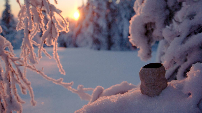 Snow-covered trees in Riisitunturi, Posio, Lapland