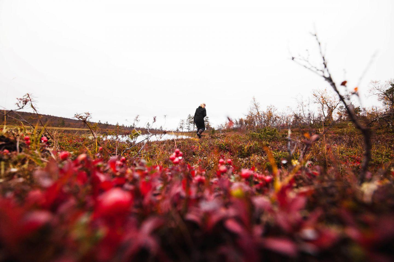Autumn in Lapland, by nature photographer Marinella Himari