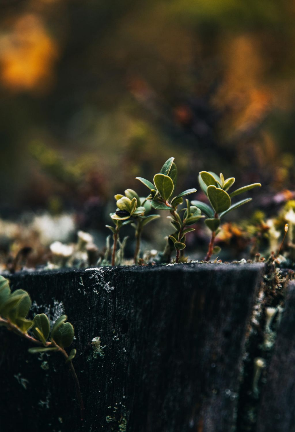 Close-up of a plant by Lapland nature photographer Marinella Himari