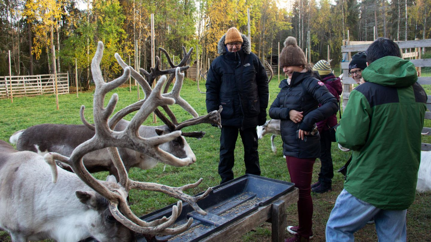 Meeting reindeer on the Fall 2018 Fam Trip to Finnish Lapland