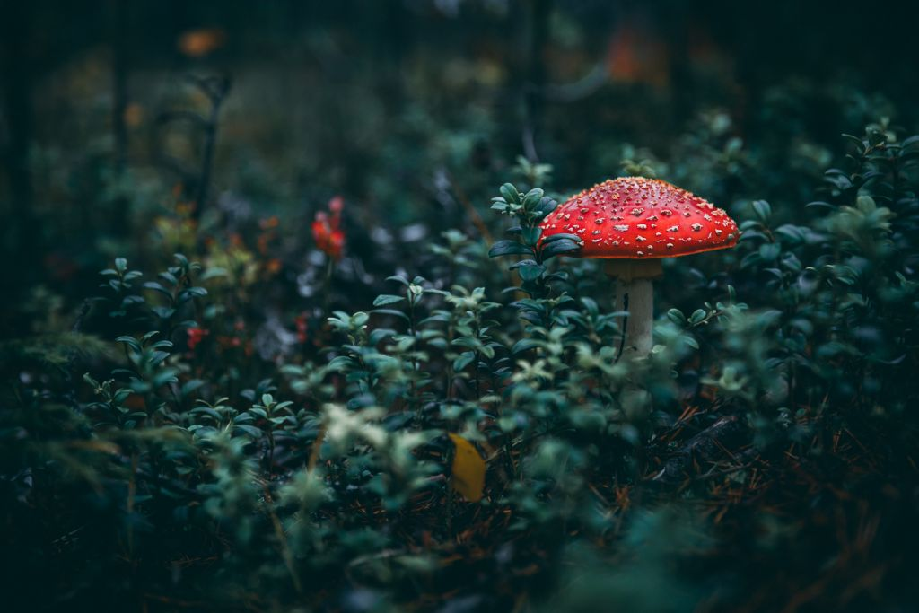 Autumn photographer, Kristof Göttling, small things