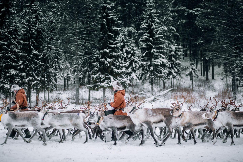Reindeer herders in Ruka-Kuusamo, Finland
