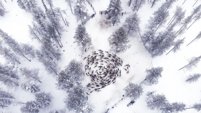 A reindeer cyclone in Savukoski-Korvatunturi, Finland