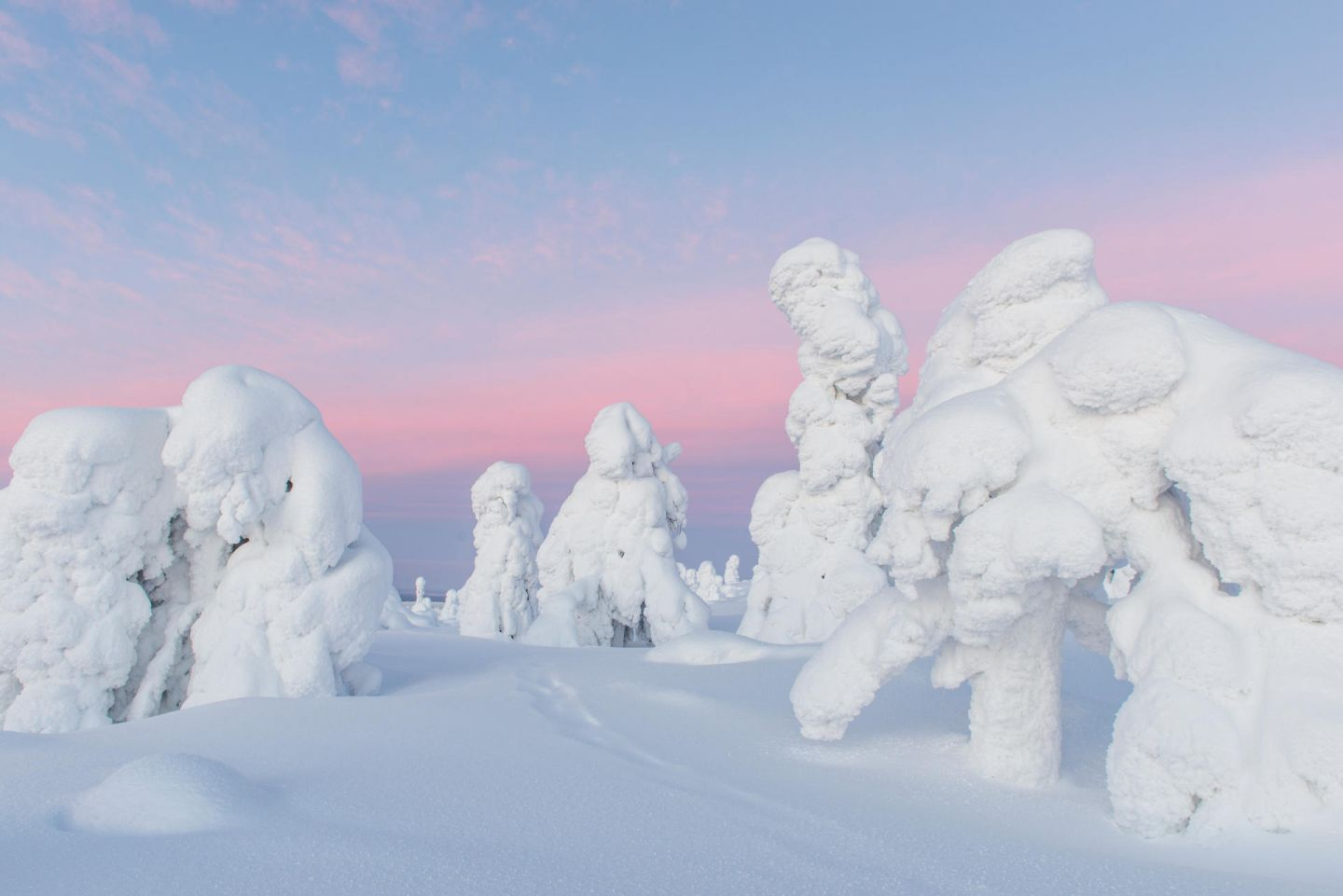 Polar night over snow-crowned trees in Lapland