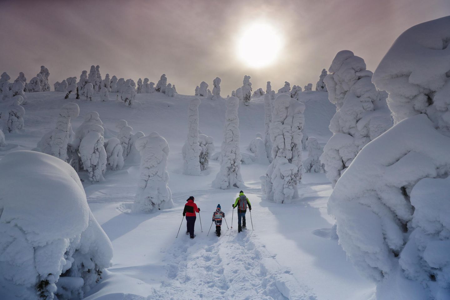 Snowy forest under the winter sun in Lapland