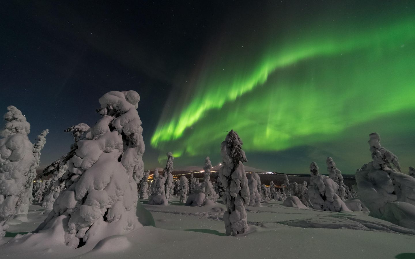 Northern Lights over snow crowned trees in Finnish Lapland in winter