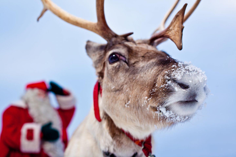 Santa Claus & his reindeer