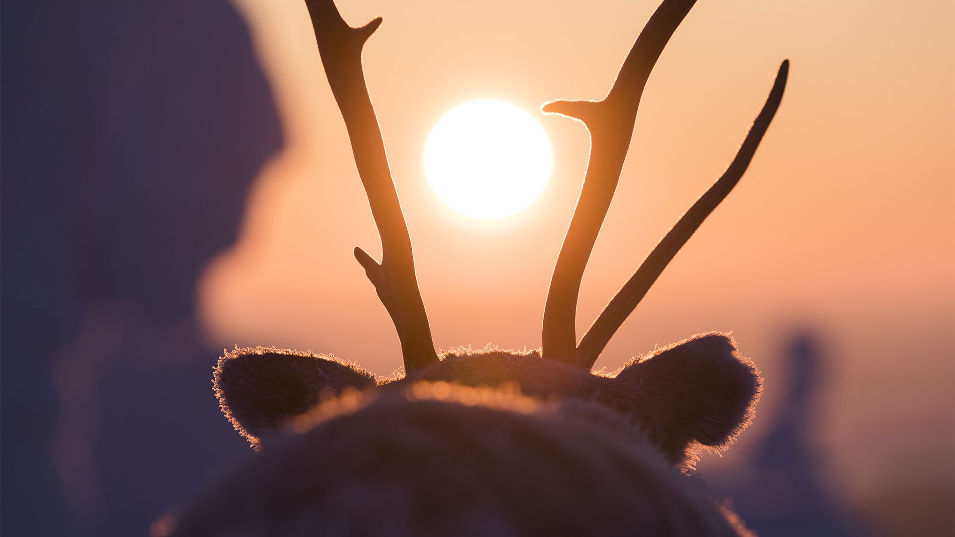 Lapland Ailo movie