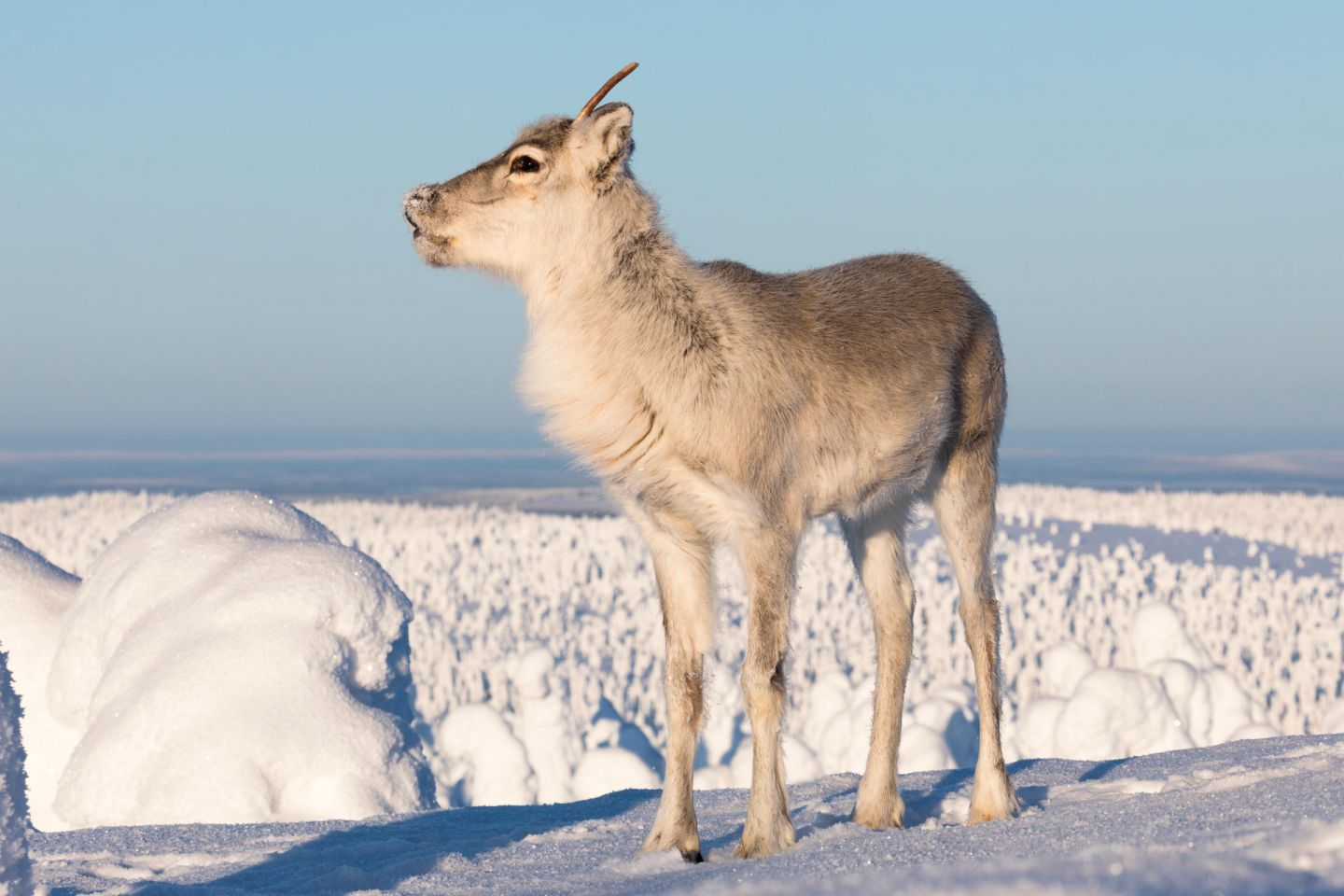 Ailo stands atop a fell in Posio, Lapland