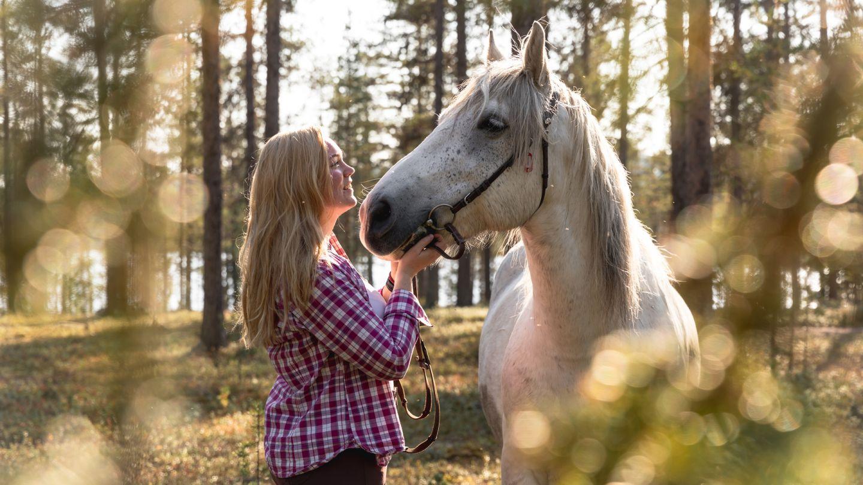 Animal tourism in Lapland