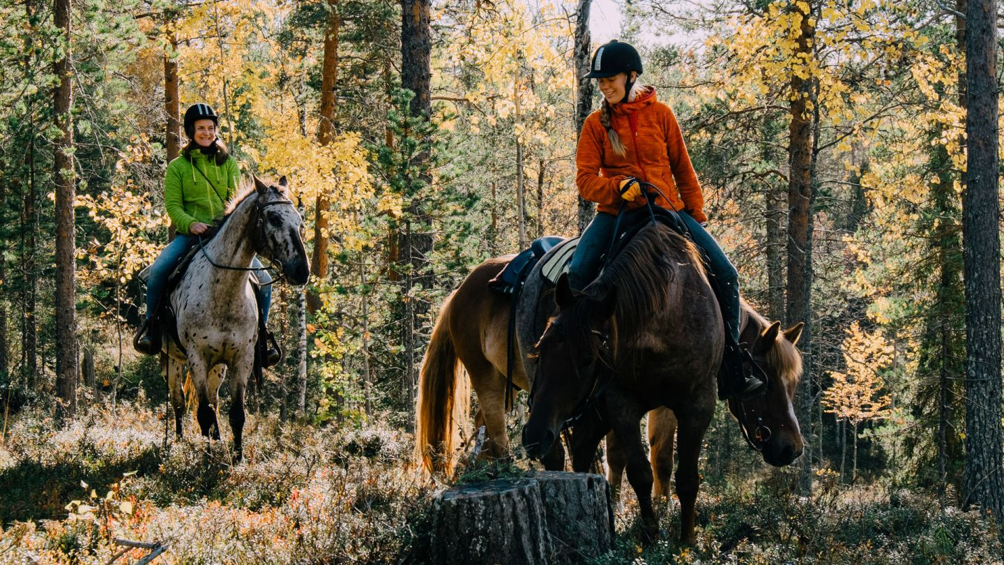 Animal Tourism in Lapland, Finland