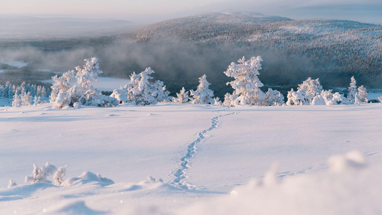 Levi winter, Snow Flower, Finland Lapland
