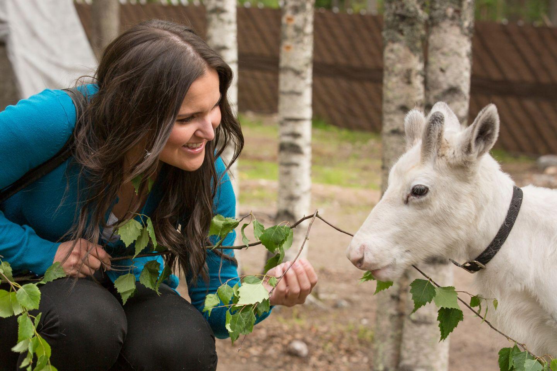 feeding a reindeer in Rovaniemi, Finland