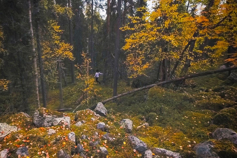 Autumn forest walk in Rovaniemi, Finland