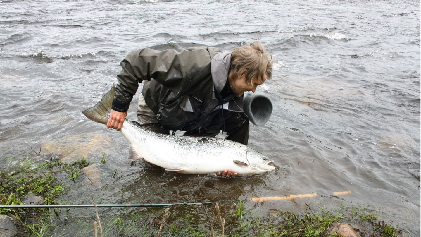 Salmon, fishing in Lapland