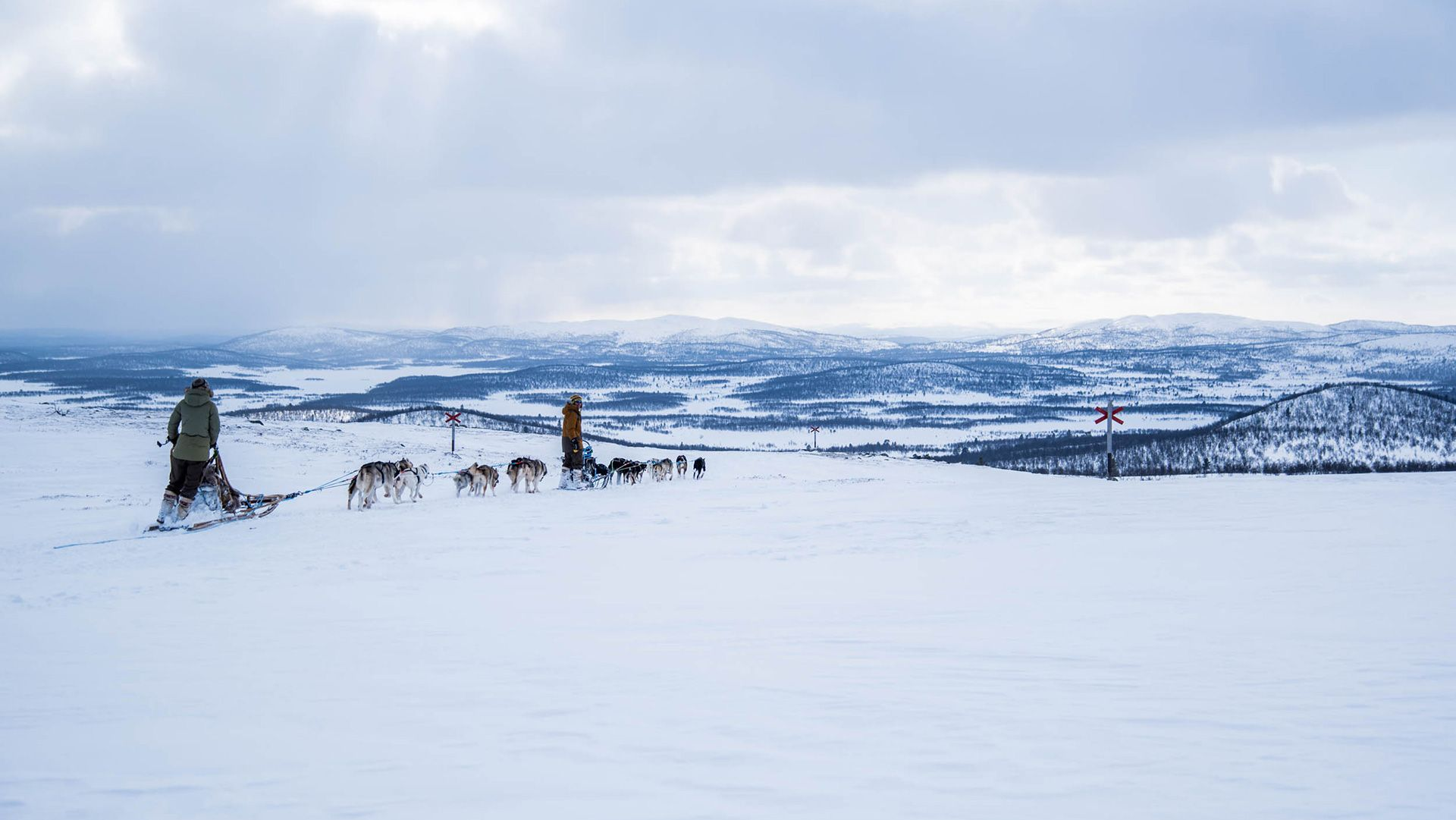 husky guide work in lapland