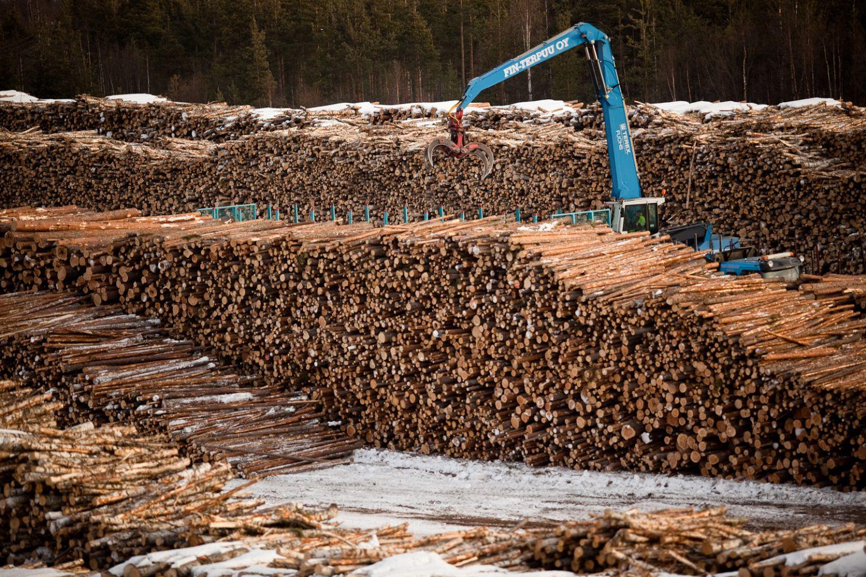 Puuta Rovaniemellä