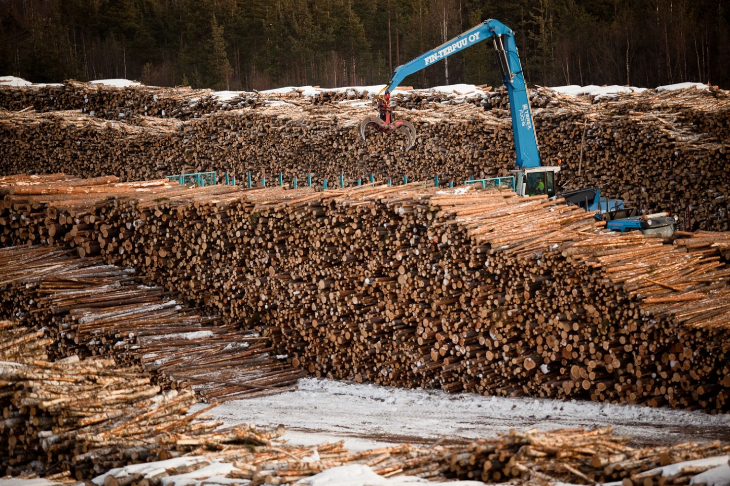 Countless chopped tree trunks in a big pile