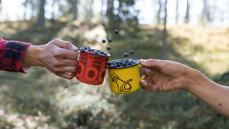 Bilberries, beginner hiking Lapland, Finland