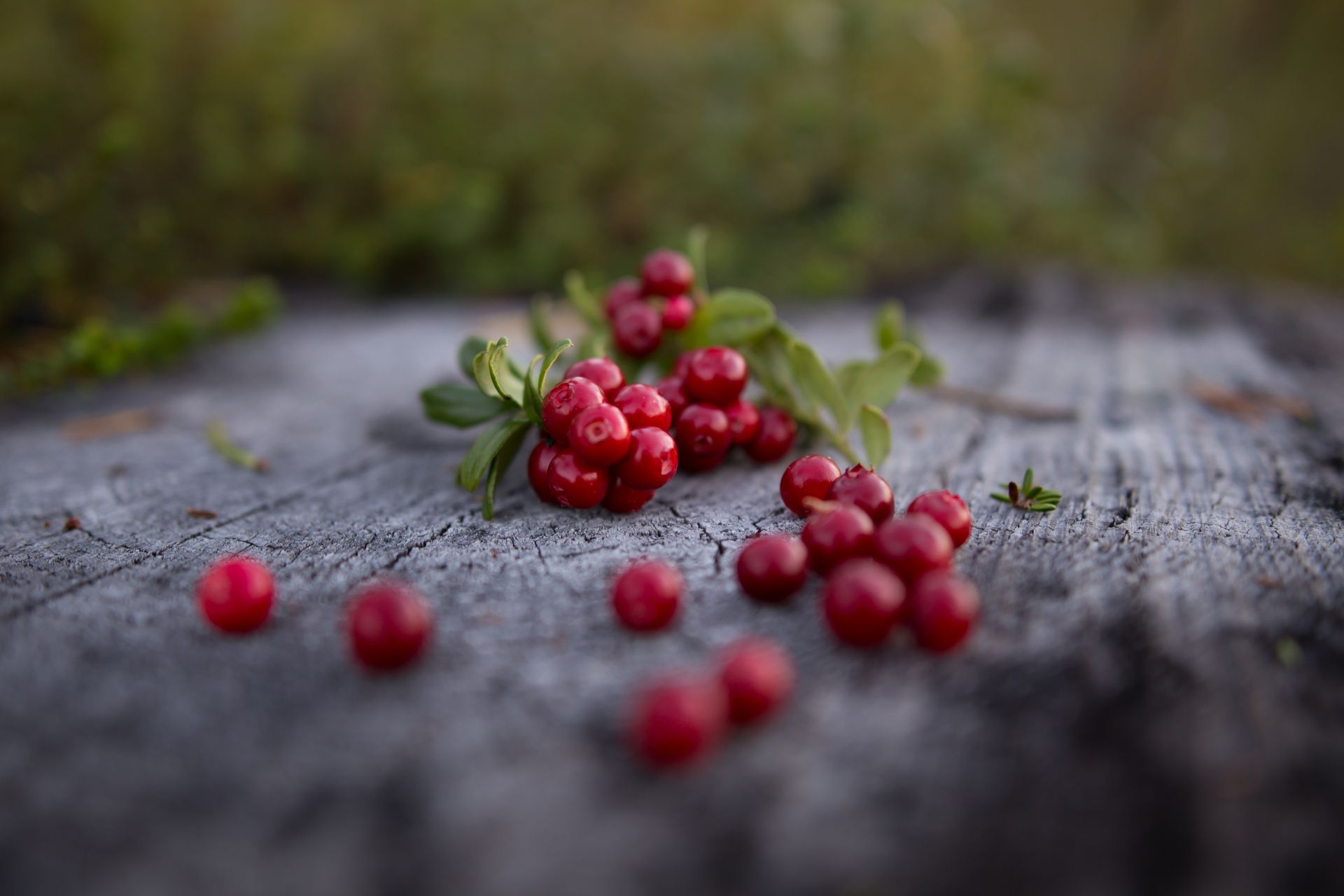 Natural products and wellbeing in Lapland