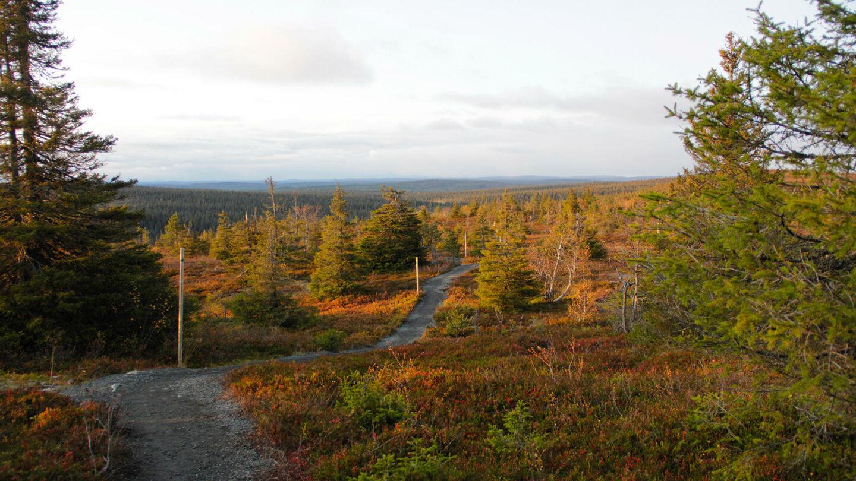 Riisitunturi National Park in Finnish Lapland