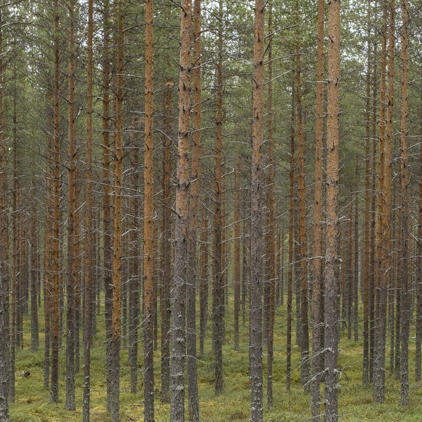 Bioeconomy and circular economy in Lapland have sustainable potential for new business and investment