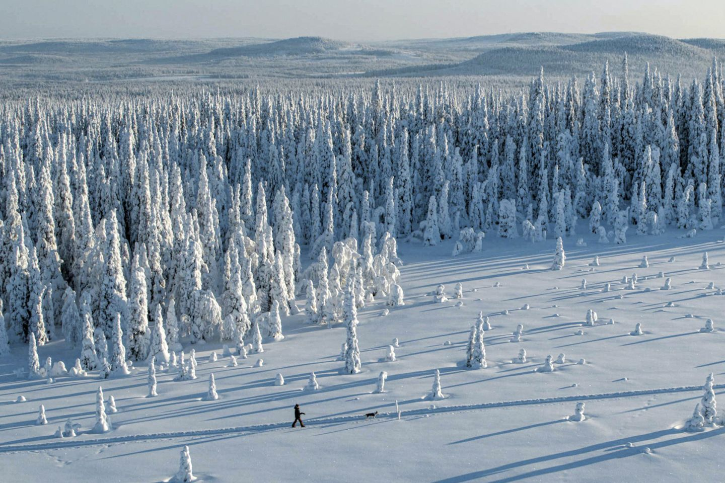 Snow-crowned trees in northern Finland
