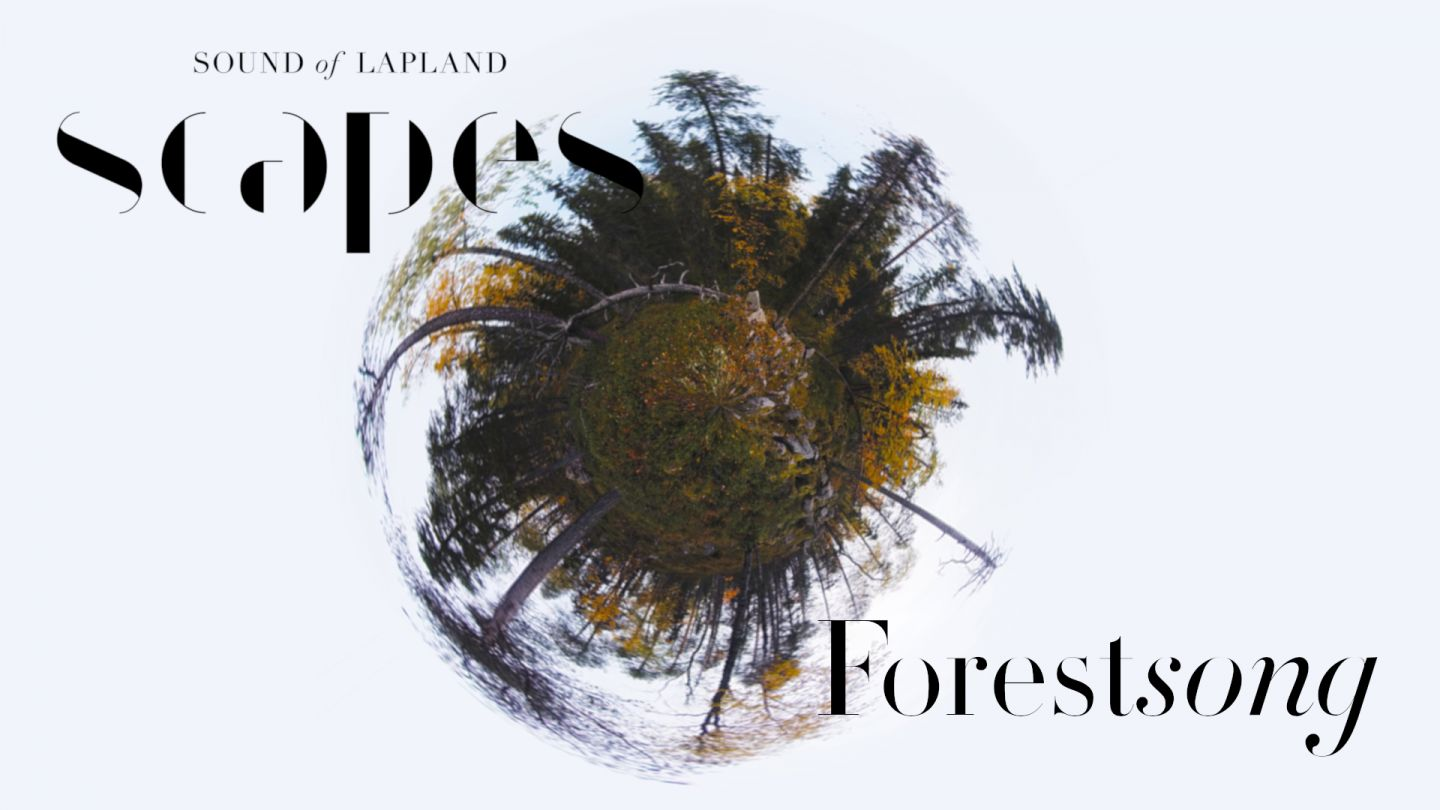 Forestsong, a 360 video, from SCAPES by Sound of Lapland