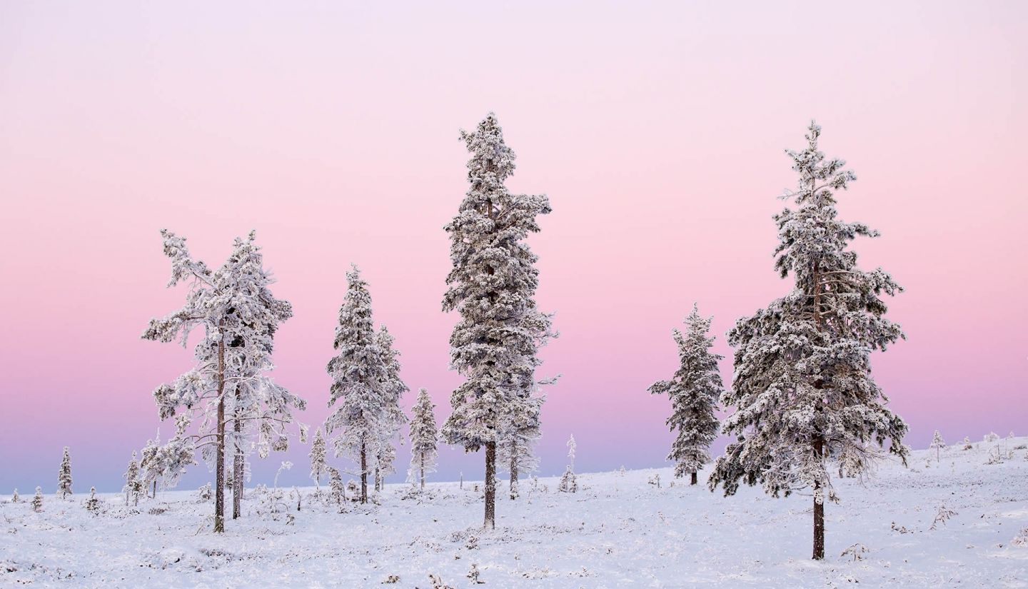 Pink winter skies in Lapland, Finland